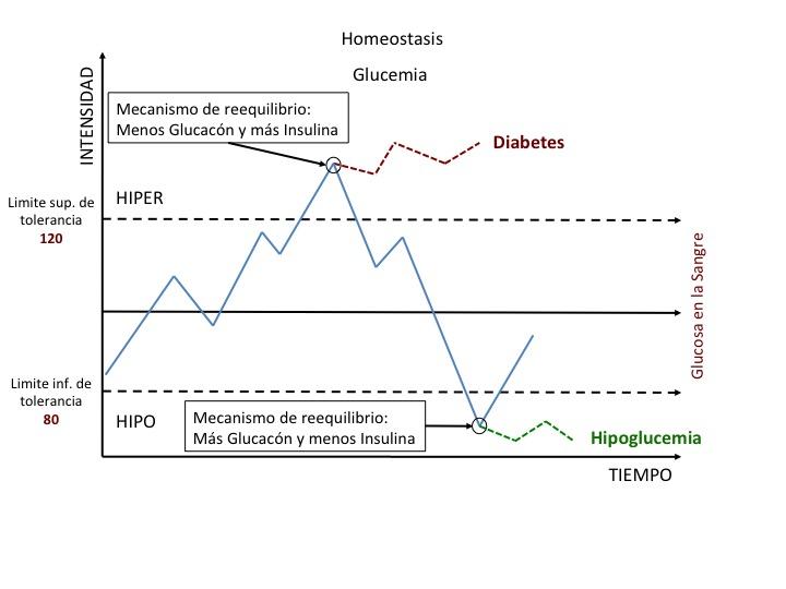 Homeostasis de laglucemia